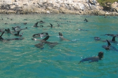 Swimming with the Seals
