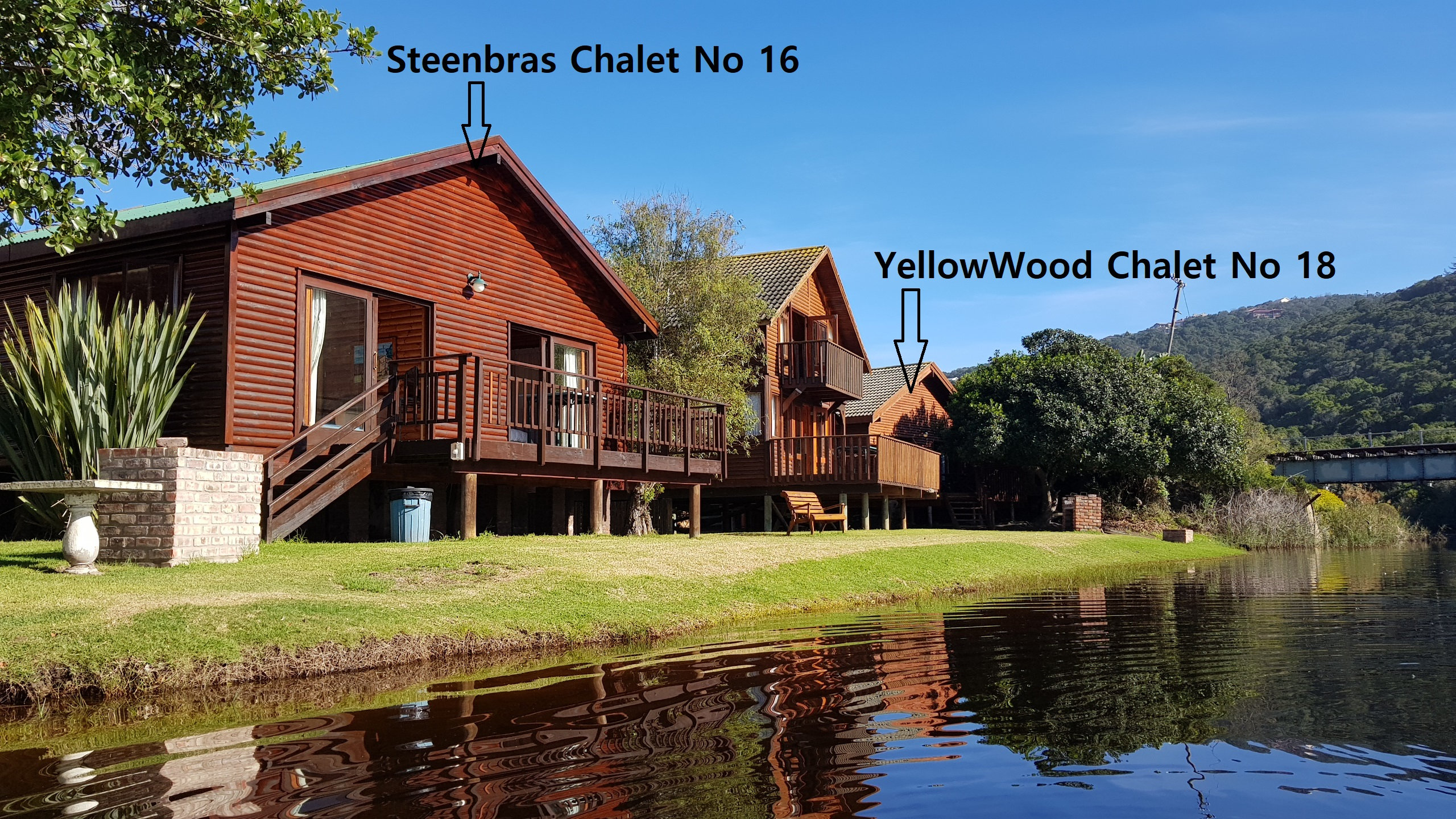 Steenbras_No16_&_YellowWood
