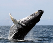 Whale watching on your doorstep