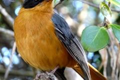 Bird_Watching_PiratesCreek